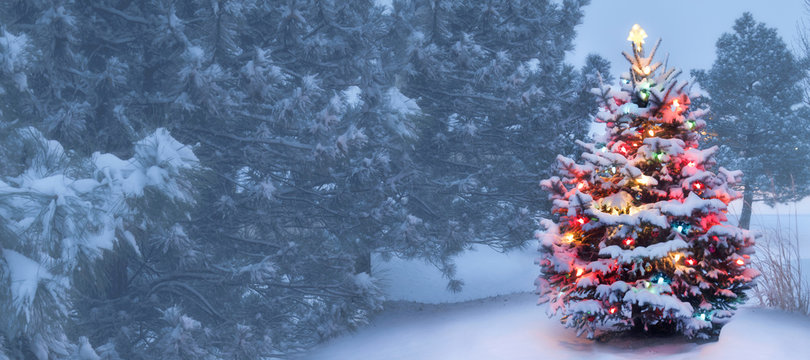 This Tree Glows Brightly On Snow Covered Christmas Morning