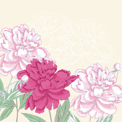Background with pink  peony. Vector illustration