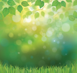 Vector green leaves branches and grass on sunshine background.