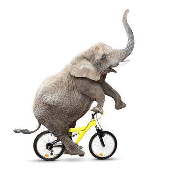 Happy elephant riding a bike.