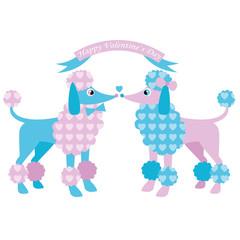 Poodles in love. Valentine's day illustration.