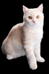 Smart & Handsome Cat
