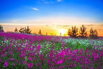 summer sunrise over a  meadow