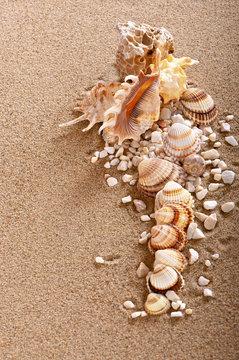 Muszle na piasku