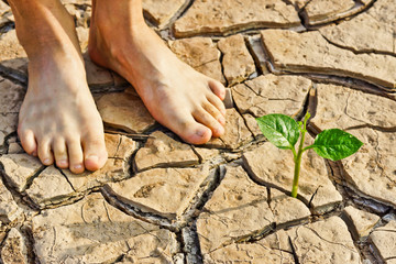 two bare feet standing near tree growing on cracked earth