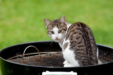 Cat on grill
