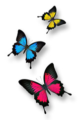Three colorful butterflies