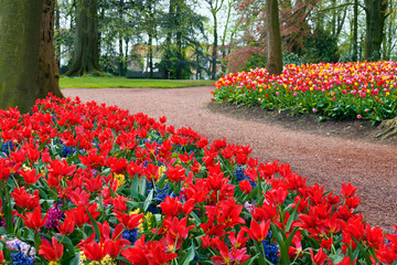 Wall Mural - Colorful tulips in the park.
