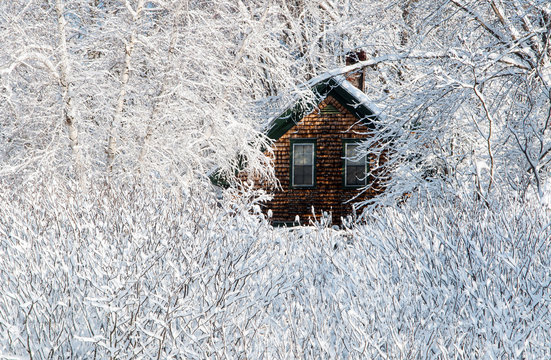 Snow Covered Trees and Brush Around Wooden House After Storm in Maine