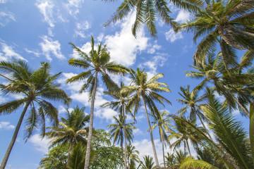 Palms under the sky