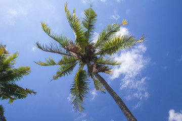 Palm under the sky