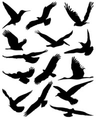 Black silhouettes of  birds in flight, vector