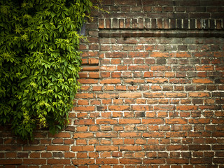 Red brick wall with green ivy