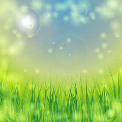 ecological background with grass