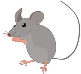 Photos illustrations et vid os de d ratisation - Dessin de petite souris ...