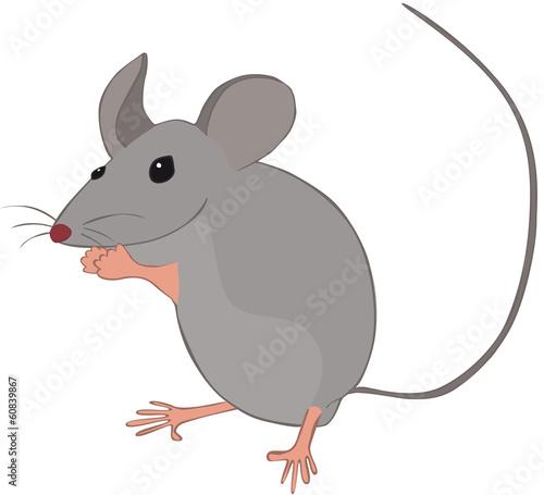 Petite souris grise debout fichier vectoriel libre de droits sur la banque d 39 images fotolia - Dessin petite souris ...