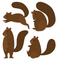 Squirrel icon set on white background