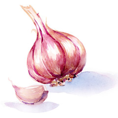 garlic. watercolor painting on white background