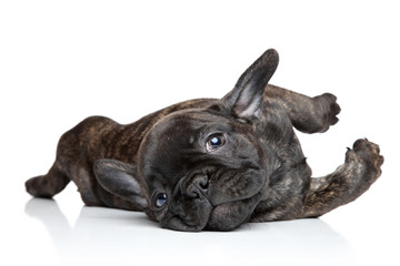 Deurstickers Franse bulldog French bulldog puppy resting