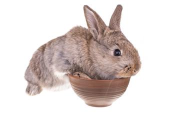 Rabbit sitting against