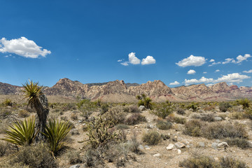 Arizona landscape view