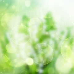 green festive bokeh background