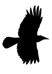 Flying crow silhouette