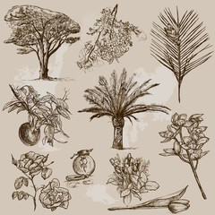Trees, Plants and Flowers around the World (set no.2)