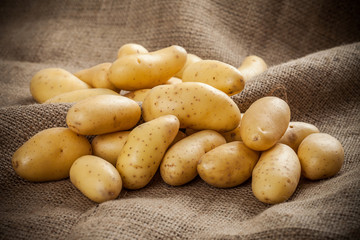 Fresh potatoes on a canvas background