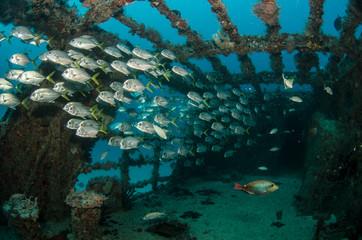 Foto auf AluDibond Schiff shipwreck, caribbean sea