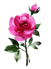 Watercolor dark pink rose