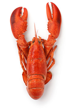 boiled lobster isolated on white background