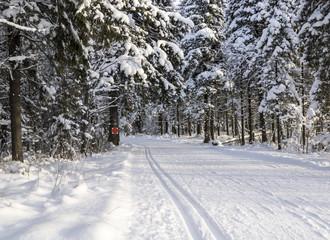 Ski track in winter Russian forest