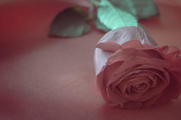 Pink Rose on Satin Fabric