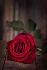 rote Rose zum Valentinstag