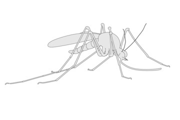 cartoon image of mosquito insect
