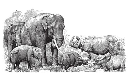 Dzikie zwierzęta - 61026862