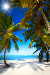 art summer Untouched tropical beach