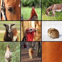 nine animals from the farm