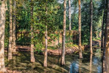 trees moat angkor thom cambodia