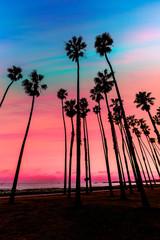 Fototapete - California sunset Palm tree rows in Santa Barbara