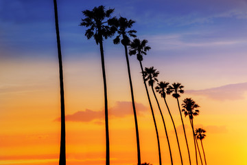 Wall Mural - California sunset Palm tree rows in Santa Barbara