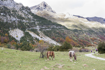 Aluminium Prints Grocery horses grazing in a meadow surrounded by mountains