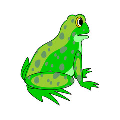 A funny cartoon green frog
