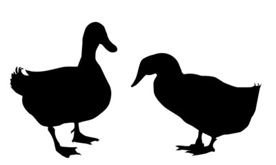 Ducks silhouettes -vector illustration