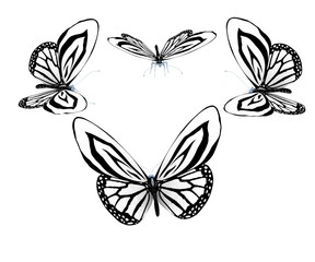 fancy butterflies