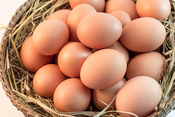 Brown Eggs on white background