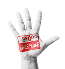 Open hand raised, Stop Liver Fluke sign painted