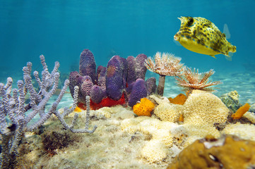 Colorful underwater marine life seabed