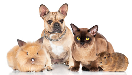 small group of pets